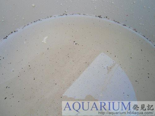 サンゴ砂洗浄