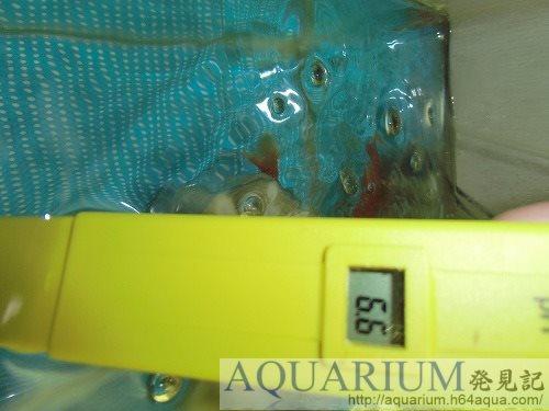 金魚水槽pH測定